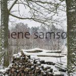 Forrest logs