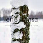 Winter pole with snow